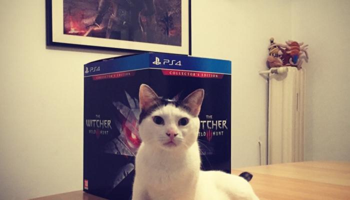 the-witcher-3-wild-cat-hunt.jpg